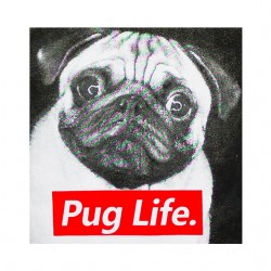 shirt Pug life white...