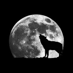 tee shirt loup pleine lune  sublimation