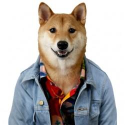 tee shirt chien qui a la...