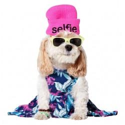 dog tee shirt selfie white...