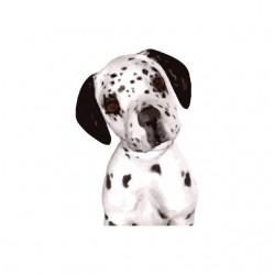 Dog portrait dalmatian...