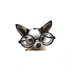 T-shirt dog with glasses...
