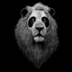 tee shirt lion design art work black sublimation
