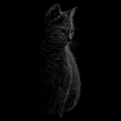 t-shirt cat design art black sublimation
