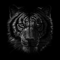 tee shirt tiger art design black sublimation