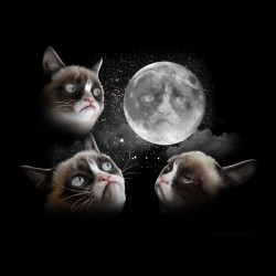 shirt cat of the moon sublimation