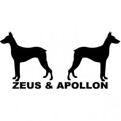 T-shirt Zeus & Apollo...
