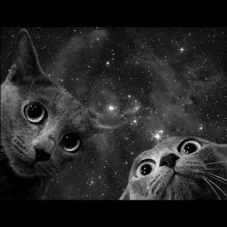 Tee shirt chats de espace, space cats galaxy  sublimation