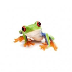 T-shirt frog arboricole...