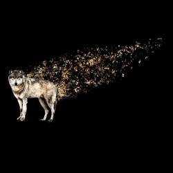 Musical Wolf Tee Shirt...