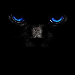 cat eyes t-shirt in black sublimation
