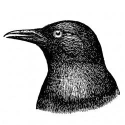 tee shirt crow  sublimation