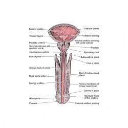 Penis Anatomy white sublimation t-shirt